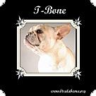 Adopt A Pet :: T-Bone
