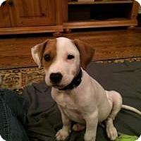 Adopt A Pet :: Baby Pumpkin - Marlton, NJ