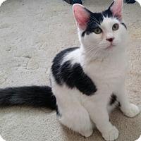 Adopt A Pet :: Jellybean - Phoenix, AZ