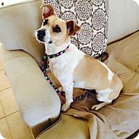 Adopt A Pet :: Tori in San Antonio - San Antonio, TX