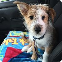 Adopt A Pet :: Oscar P. - Austin, TX
