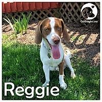 Adopt A Pet :: Reggie - Novi, MI