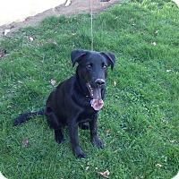 Adopt A Pet :: Jackson - East McKeesport, PA