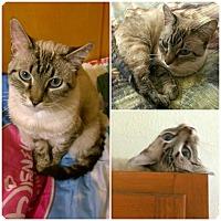 Adopt A Pet :: Princess of Everything - Ravenna, TX