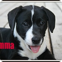 Adopt A Pet :: Jemma - Brazil, IN