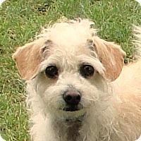 Adopt A Pet :: Bella - Walnut Creek, CA