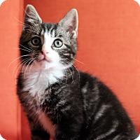 Adopt A Pet :: MacGregor - Brooklyn, NY