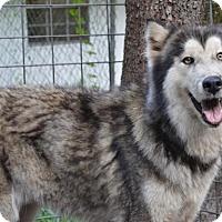 Adopt A Pet :: Debbie - Orlando, FL