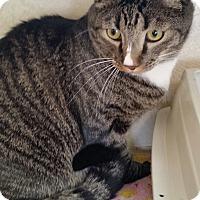 Adopt A Pet :: Slade - Tombstone, AZ