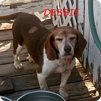 Adopt A Pet :: DEBBIE - Ventnor City, NJ