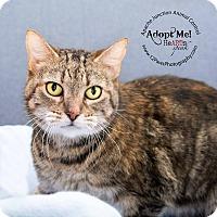 Adopt A Pet :: Vader - Apache Junction, AZ