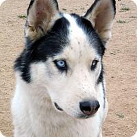 Adopt A Pet :: Haisten - Cedar Crest, NM