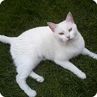 Adopt A Pet :: Queenie - Greensburg, PA