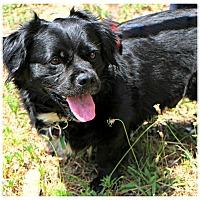 Adopt A Pet :: Tiran - Forked River, NJ