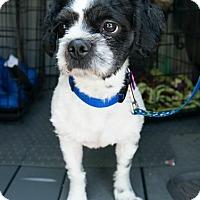 Adopt A Pet :: Bert - Bristol, CT