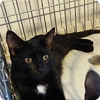 Adopt A Pet :: Scarlett - Jeannette, PA