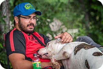 American Bulldog Mix Dog for adoption in Bandera, Texas - Joe