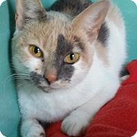 Adopt A Pet :: Ember - Franklin, NH