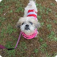 Adopt A Pet :: Lullabelle - Hazlet, NJ