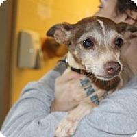 Adopt A Pet :: Delta - Asheville, NC