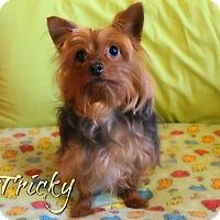 Adopt A Pet :: Tricky - Benton, LA
