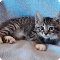 Adopt A Pet :: Caramel - Templeton, MA