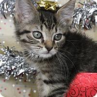 Adopt A Pet :: Luigi - Mayflower, AR
