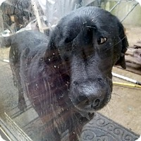 Adopt A Pet :: Tonka - Battle Ground, WA