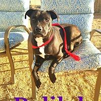 Adopt A Pet :: Delilah - California City, CA