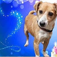 Adopt A Pet :: MORRIS - Fairfield, CA