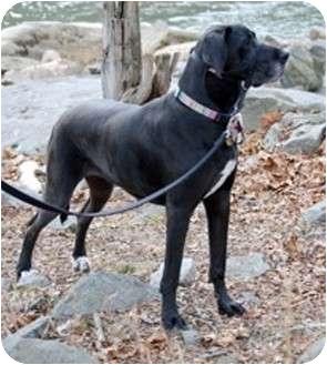 Adopt A Dog Martinsburg Wv