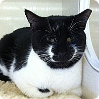 Adopt A Pet :: Sylvia - Riverhead, NY