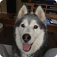 Adopt A Pet :: Jacob - Belleville, MI