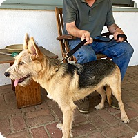 Adopt A Pet :: Marco Polo - Encino, CA