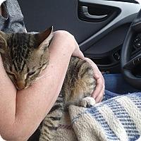 Adopt A Pet :: Thomas - Mesa, AZ
