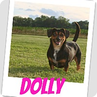 Adopt A Pet :: Dolly - Brazil, IN