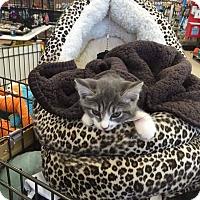 Adopt A Pet :: Strawberry - Putnam, CT
