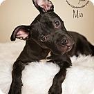 Adopt A Pet :: Mia