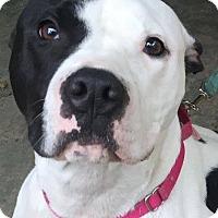 Adopt A Pet :: Audrey - Kansas City, MO