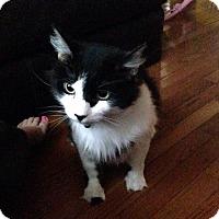 Adopt A Pet :: Oreo - Harrisonburg, VA