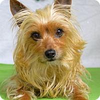 Adopt A Pet :: Viktor - Dublin, CA
