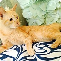 Adopt A Pet :: Nancy - Addison, IL