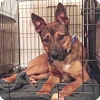 Adopt A Pet :: Sharky - Cincinnati, OH