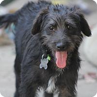 Adopt A Pet :: Frack - Norwalk, CT