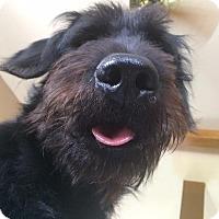 Adopt A Pet :: Watson - Brazil, IN