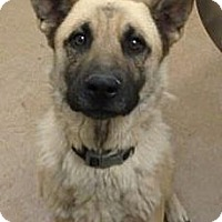 Adopt A Pet :: Boy - Las Vegas, NV