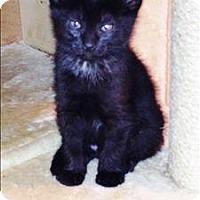 Adopt A Pet :: Baby Girl K1 Aka Linus - Sherwood, OR