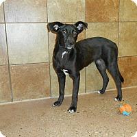 Adopt A Pet :: Spencer *Petsmart GB* - Appleton, WI