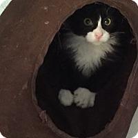 Adopt A Pet :: Ori - Grand Ledge, MI
