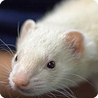 Adopt A Pet :: Daniel - Balch Springs, TX